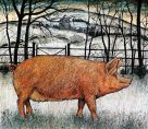 Seren Bell, Pig In The Snow
