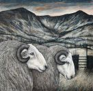 Seren Bell, Welsh Mountain Rams