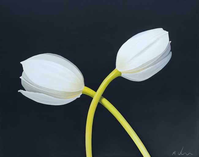 Michael de Bono, Two White Tulips
